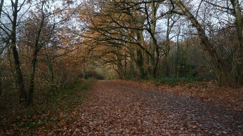 Sentier-nature.jpg